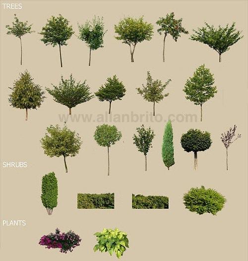 texturas-gratuitas-vegetacao-maquetes-3d.jpg