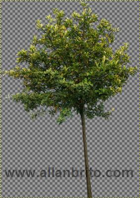 render-texturas-transparencia-blender-3d-yafaray-01.png