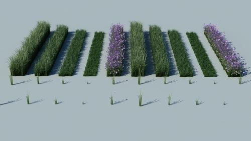 tutorial-3dsmax-vray-vegetacao-grama-3d.jpg