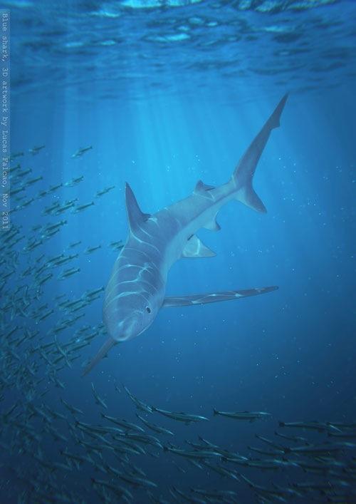 blue_shark_web.jpg
