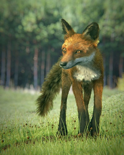 red_fox_web.jpg