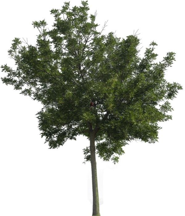 6 texturas gratuitas de árvores para exteriores