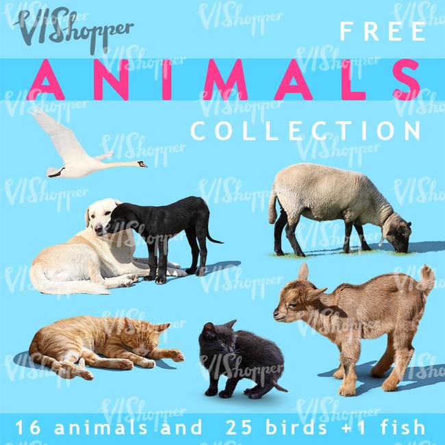 42 texturas gratuitas com animais de estimação
